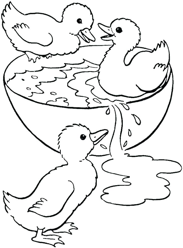 720x979 Duck Coloring Pages To Print Wood Duck Coloring Page Bell Duck