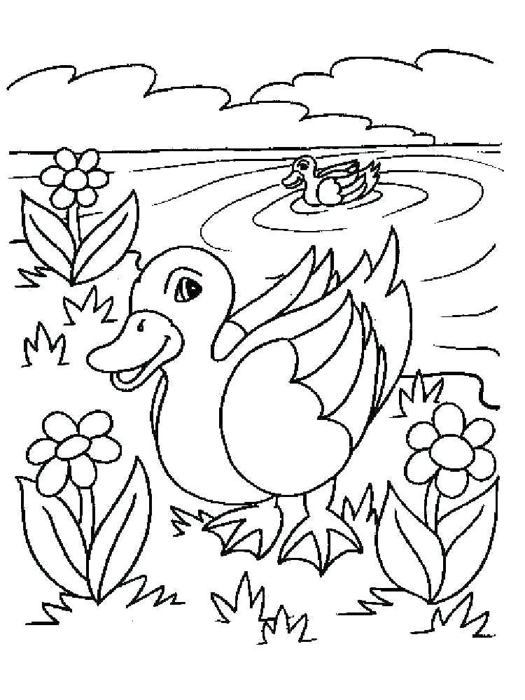 750x1000 Duckling Coloring Pages Duckling Coloring Page Wood Duck Duckling