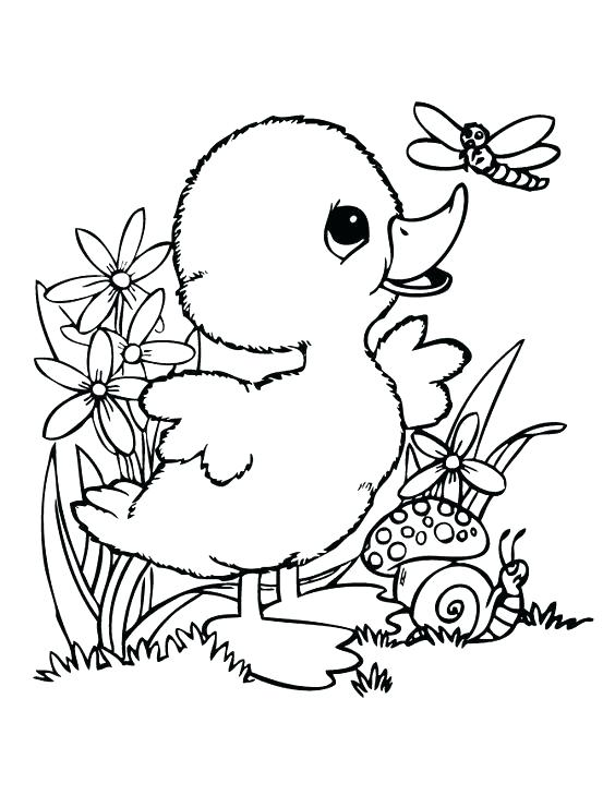 564x729 Ducks Coloring Page Coloring Picture Of Duck Cute Baby Duck