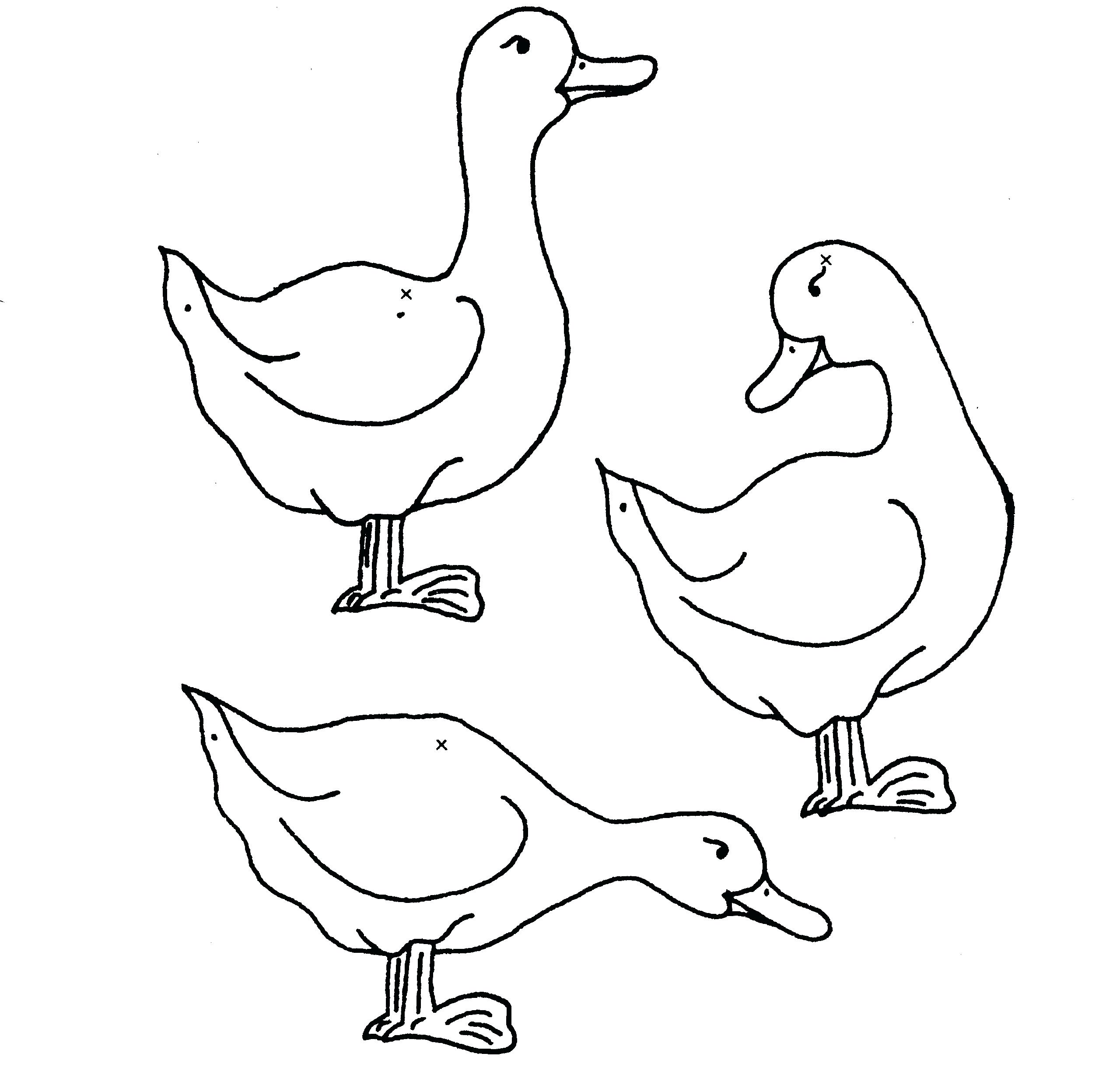 2528x2495 Best Of Coloring Ducks Coloring Page