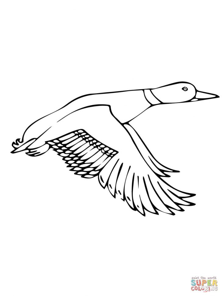 728x971 Printable Duck Coloring Pages For Kids In The Water Wood Page