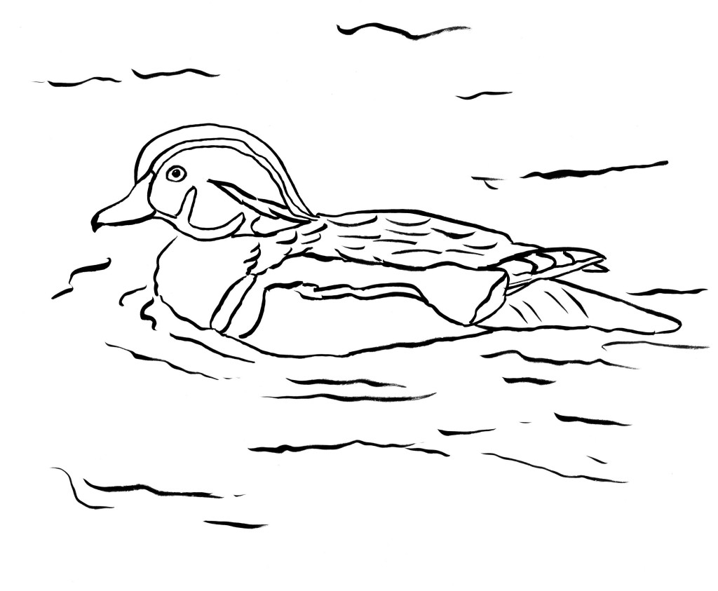 1024x843 Wood Duck Coloring Page
