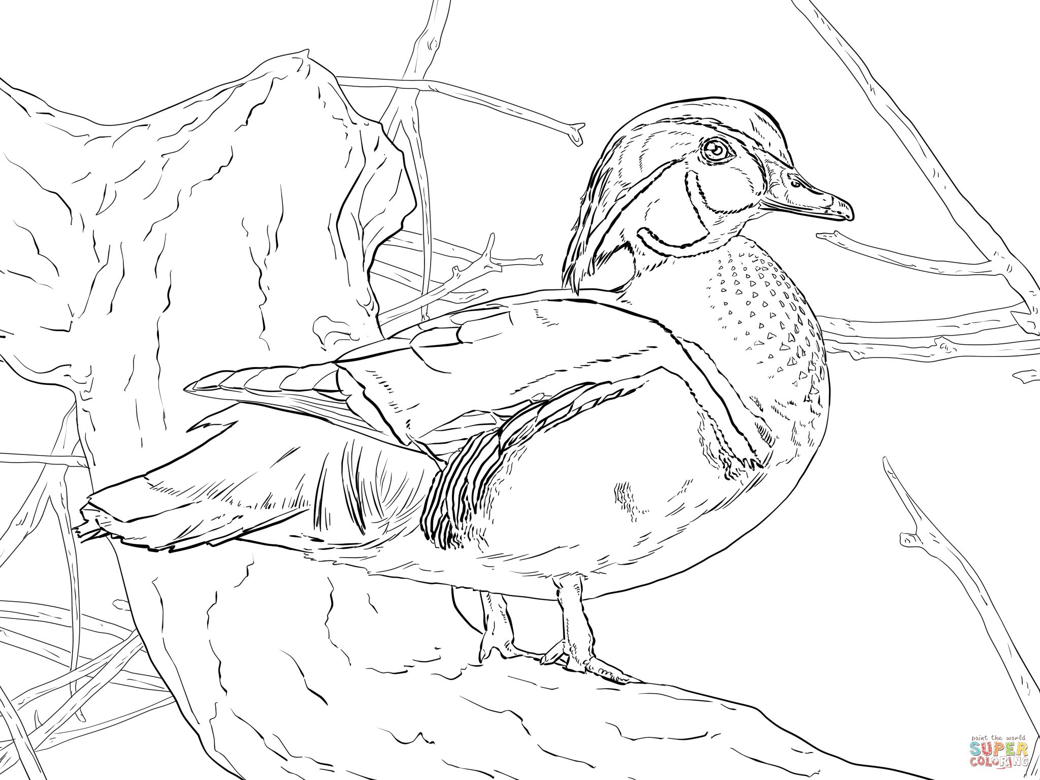 2048x1536 Wood Duck Drake Coloring Page Coloring Pages