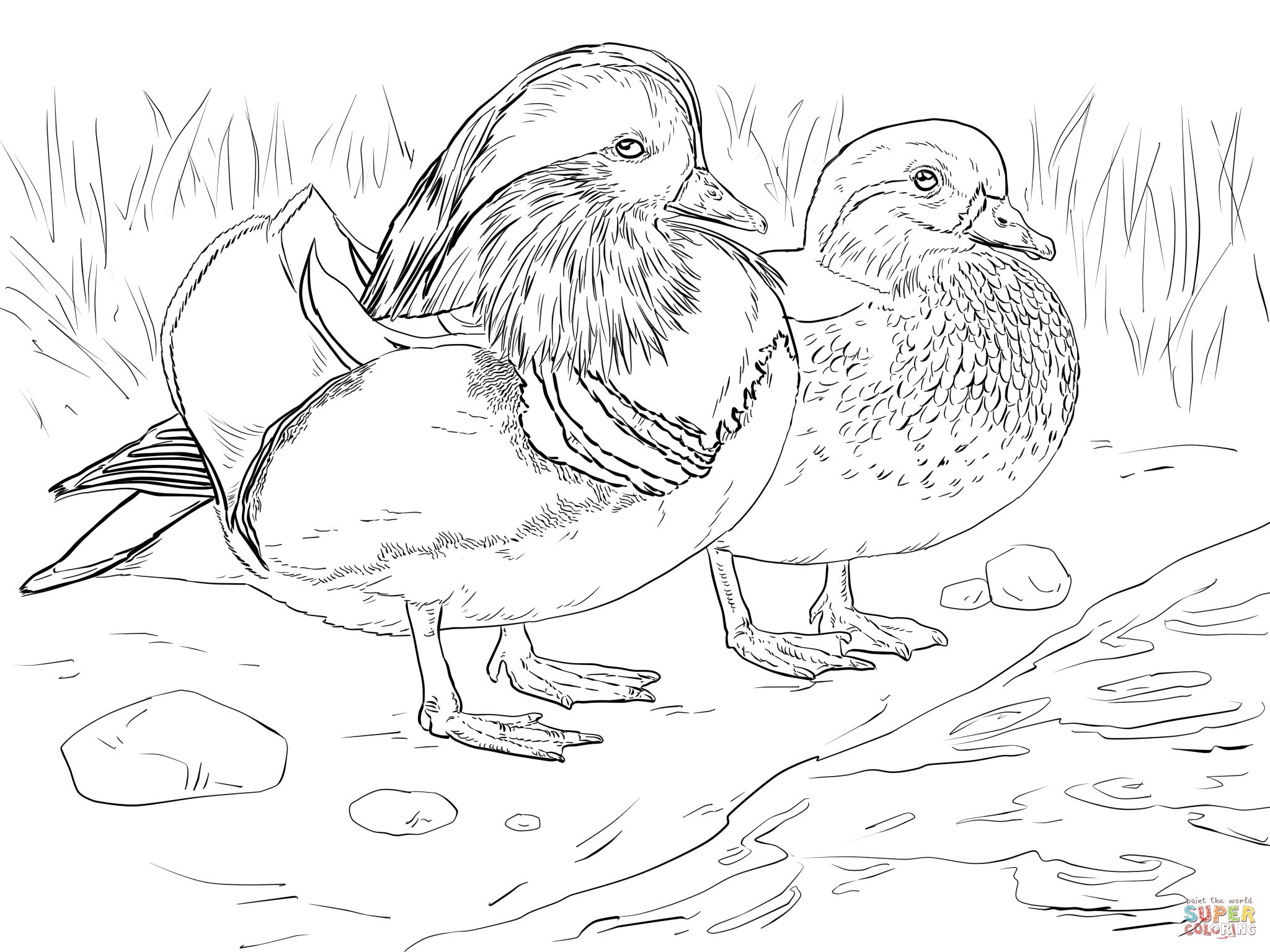 2048x1536 Wood Duck Coloring Page
