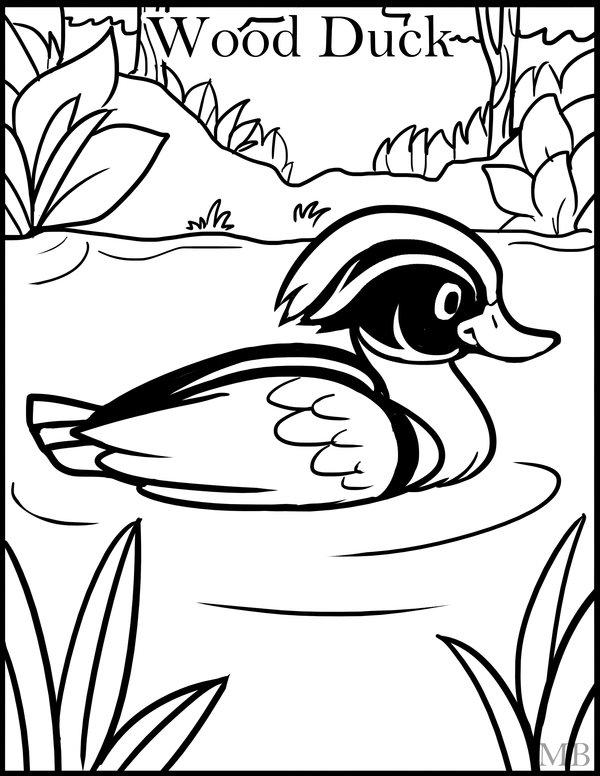 600x776 Coloringpage Wood Duck