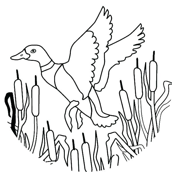 600x600 Cute Duck Coloring Pages Coloring Pages Ducks Coloring Pages Ducks