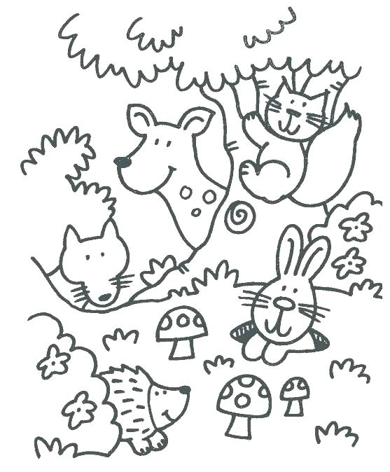 557x674 Baby Forest Animals Coloring Pages Wildlife Coloring Pages