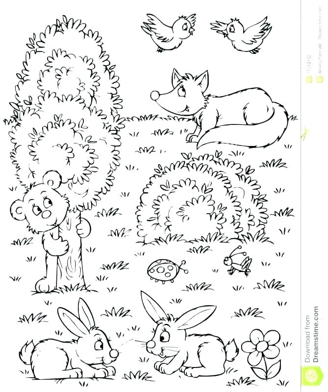669x800 Forest Animals Coloring Pages Woodland Animals Coloring Pages