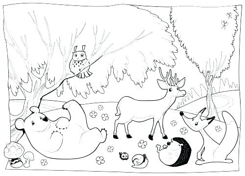 500x360 Forest Coloring Pages Woodland Animals Coloring Pages Forest