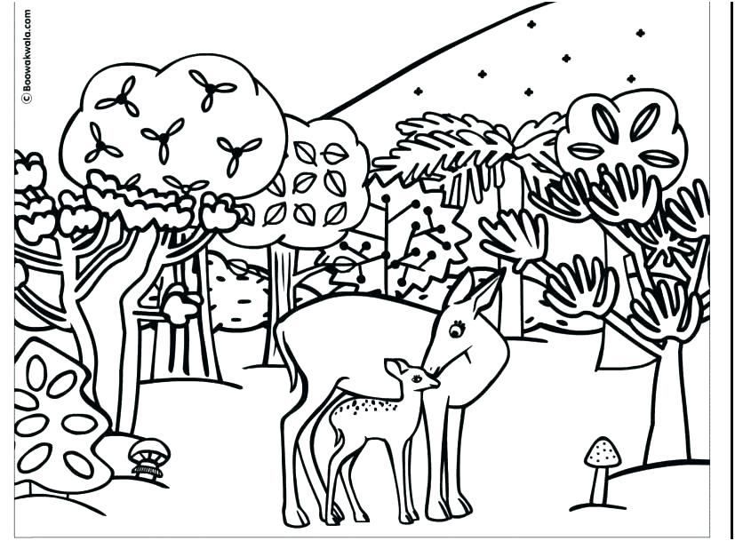 827x609 Woodland Animals Coloring Pages Animals Coloring Pages Printable