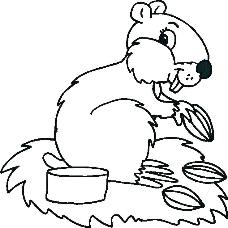 737x738 Woodland Animals Coloring Pages Forest Animals Coloring Page
