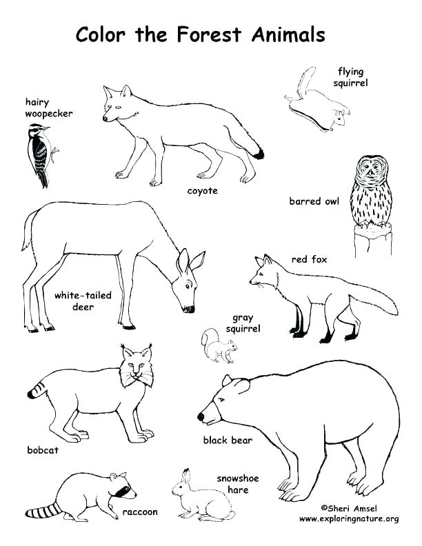 612x792 Woodland Animals Coloring Pages Wildlife Coloring Pages Printable
