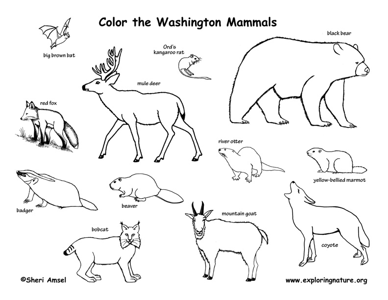 792x612 Woodland Animals Coloring Pages Many Interesting Cliparts
