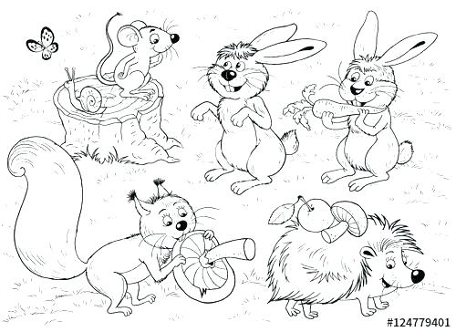 Woodland Creatures Coloring Pages At Getdrawings Com Free For