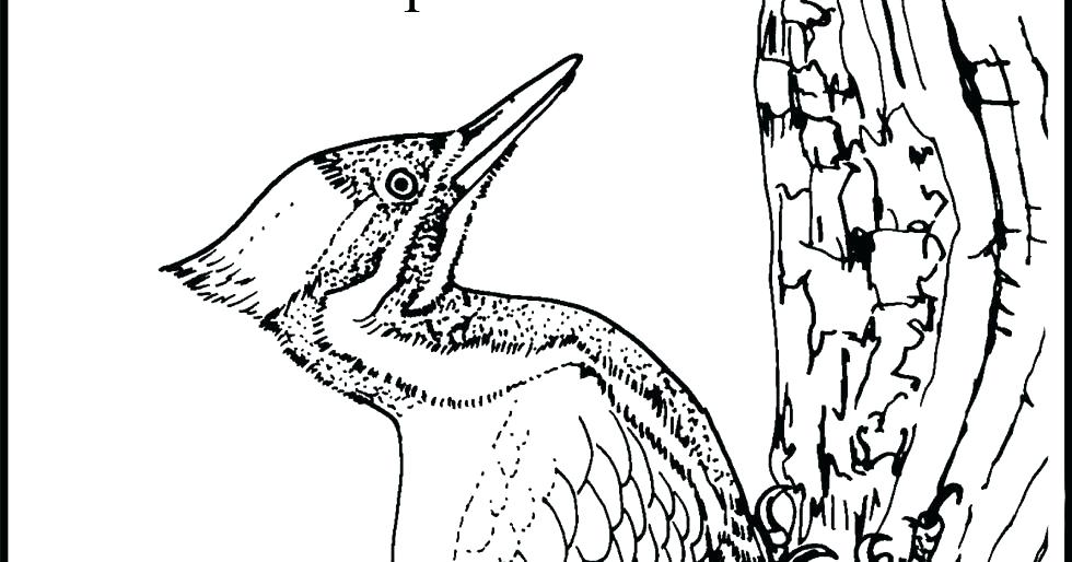 980x514 Woody Woodpecker Coloring Page Woody Woodpecker Printable Coloring