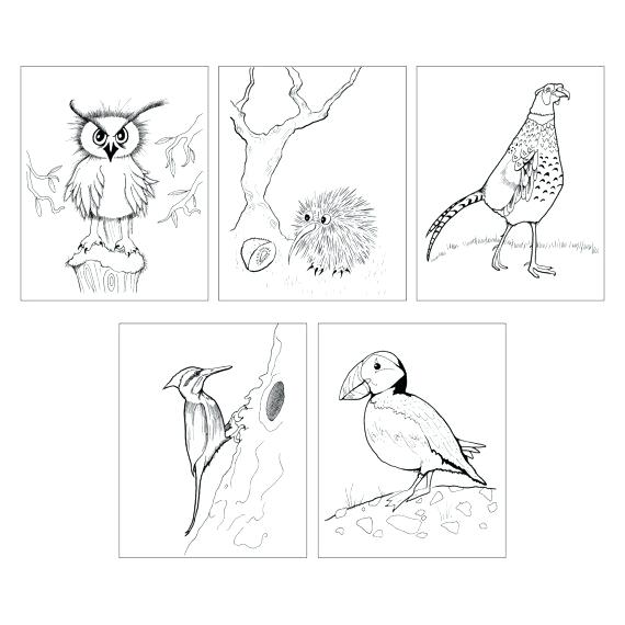 570x570 Kiwi Bird Coloring Page Bird Coloring Page Instant Download