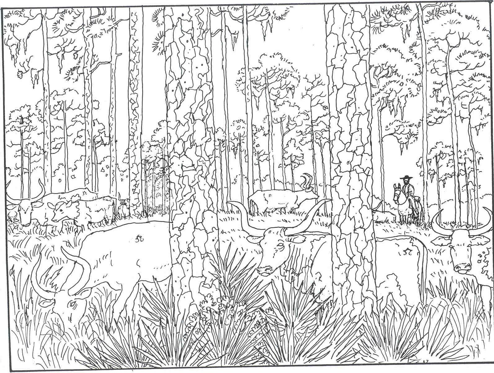 1593x1202 Forest Woods Coloring Page For Printer Friendly Versions