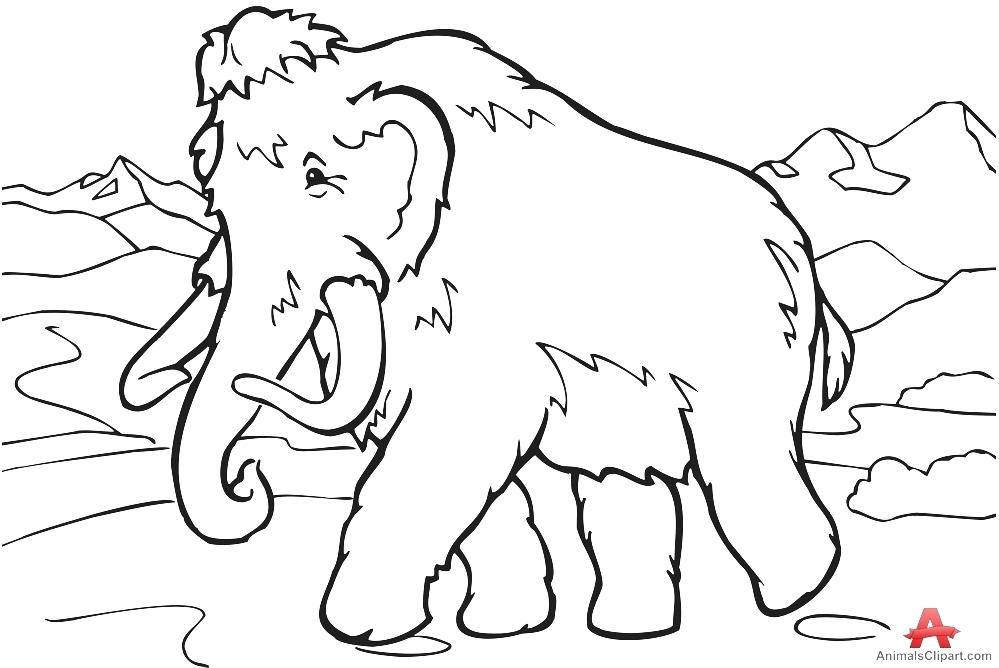 999x668 Wooly Mammoth Colouring Page Mammoth Black And White Pencil