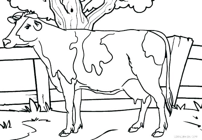 671x466 Cow Coloring Pages To Print Cow Coloring Page Cow Coloring Page