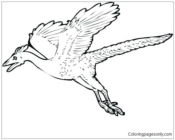 569x454 World War Planes Coloring Pages