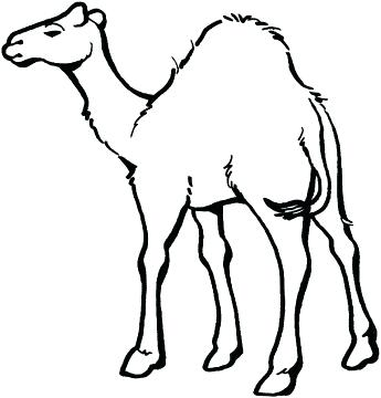 345x360 Camels Coloring Pages