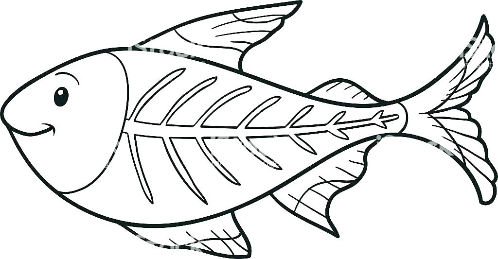 1024x533 Coloring Pictures Of Fish