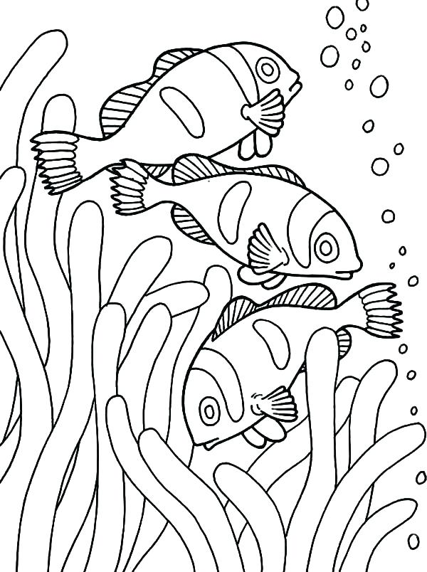 600x804 X Ray Fish Coloring Page