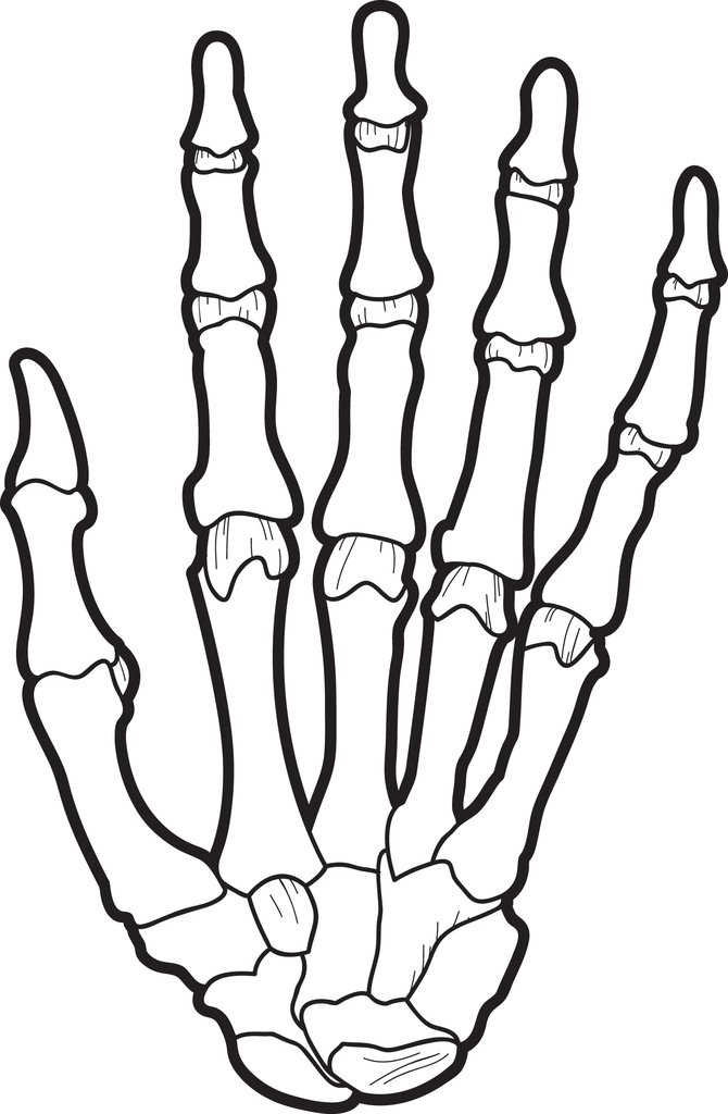 670x1024 Free, Printable X Ray Coloring Page For Kids Supplyme
