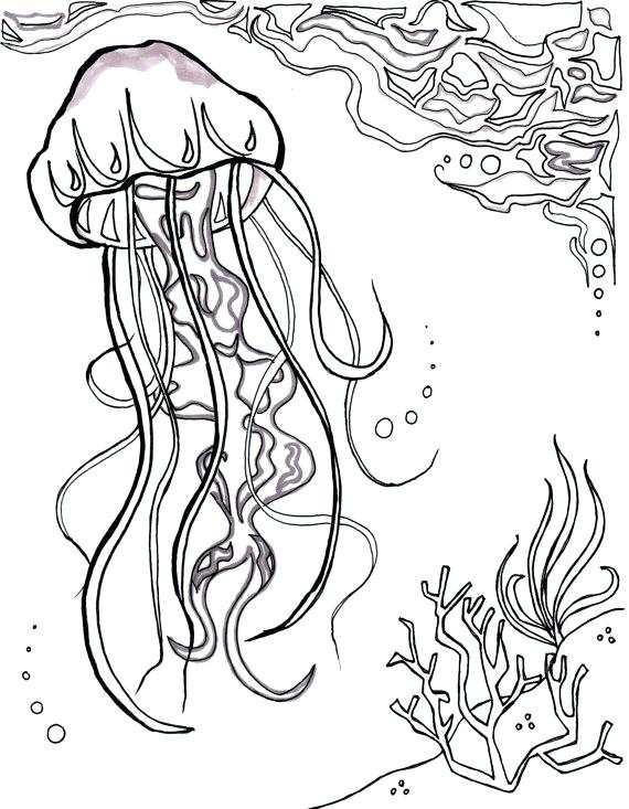 570x733 Jelly Fish Coloring Page Fish Color Pages X Ray Fish Coloring Page