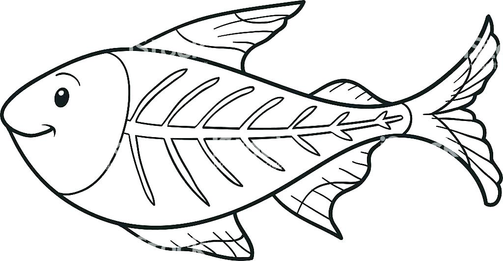 1024x533 X Ray Fish Coloring Page X Ray Fish Colouring Pages Coloring Page