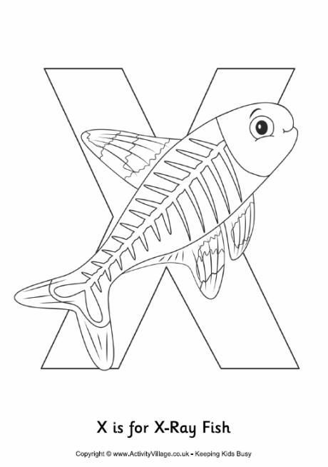 460x654 X Is For Xray Fish Colouring Page K Activities