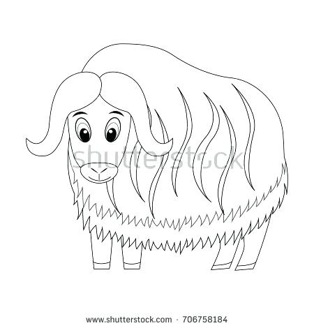 450x470 Ox Coloring Page Colorless Funny Cartoon Musk Ox Vector
