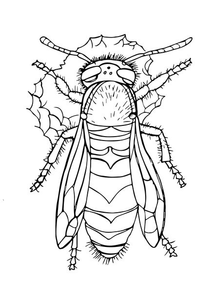 435x580 Western Yellow Jacket Coloring Page Animal Patterns