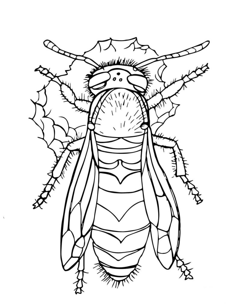 768x1024 Western Yellow Jacket For Coloring Page