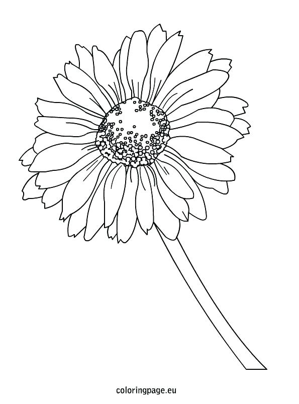 595x804 Yellow Coloring Page Free Printable Daisy Duck Coloring Pages Page
