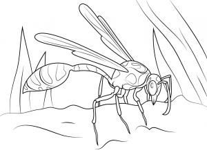300x224 Yellow Jacket Wasp For Coloring Pages