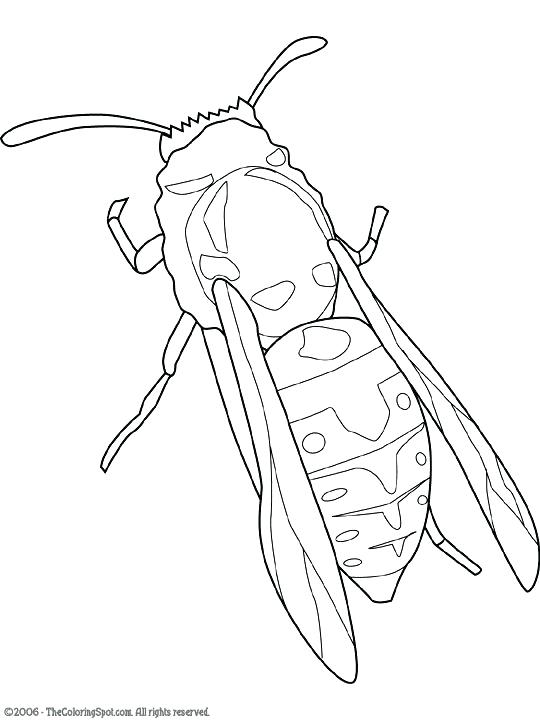 540x720 Yellow Jacket Coloring Page
