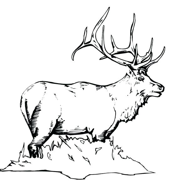 546x585 Yellowstone National Park Coloring Pages Elk Coloring Page