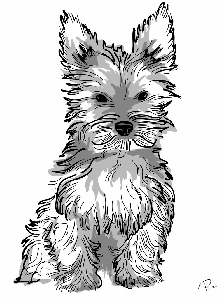 768x1024 Yorkshire Terrier Coloring Page Samantha Bell Unusual Yorkies