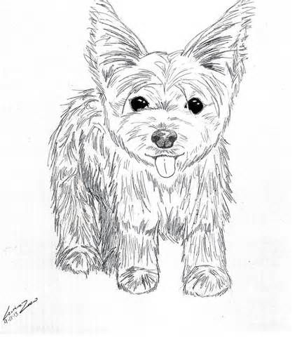 Yorkie Dog Coloring Pages