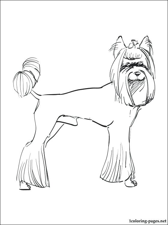 560x750 Yorkie Color Pages Coloring Page Teacup Coloring Pages Coloring