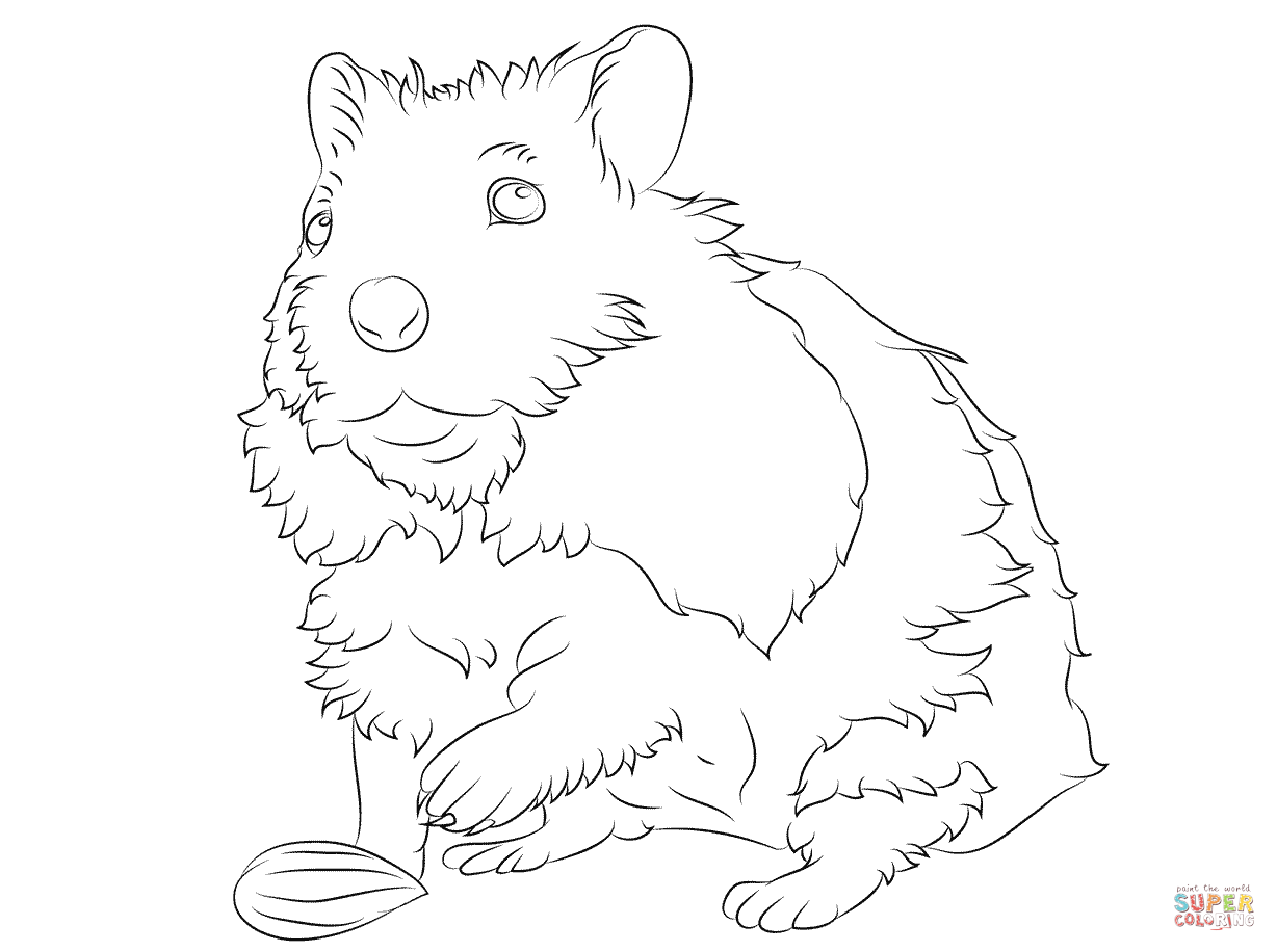 1228x916 Coloring Hamster