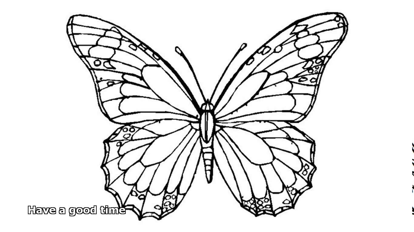 1366x768 Butterfly Coloring Pages