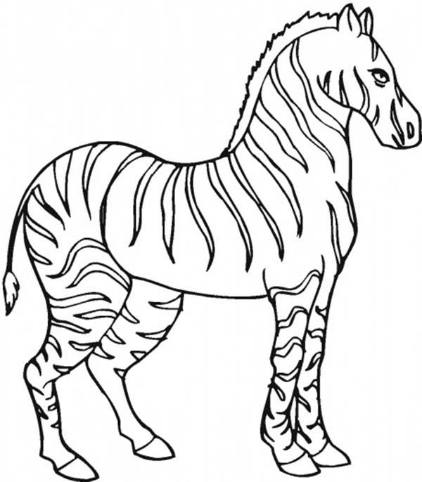 600x686 Stallion Zebra Coloring Page