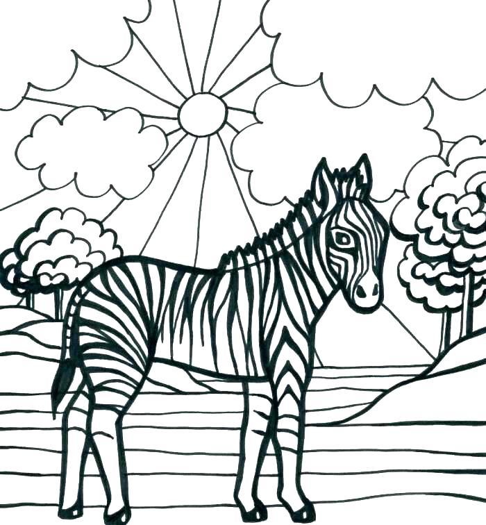 700x756 Zebra Color Page Coloring Pages Zebra Mammals Zebra Free Printable