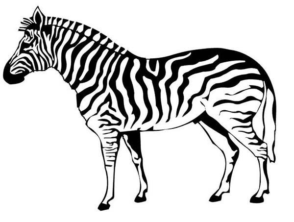 600x453 Zebra Coloring Page Free Coloring Kids Area Zebra