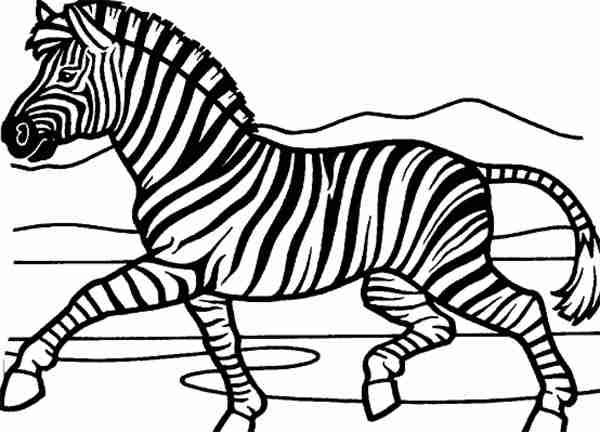 600x432 Zebra Coloring Pages Olegratiy