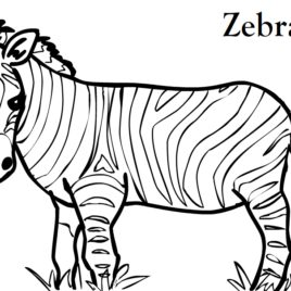 268x268 Free Printable Zebra Coloring Pages For Kids Coloring Pages