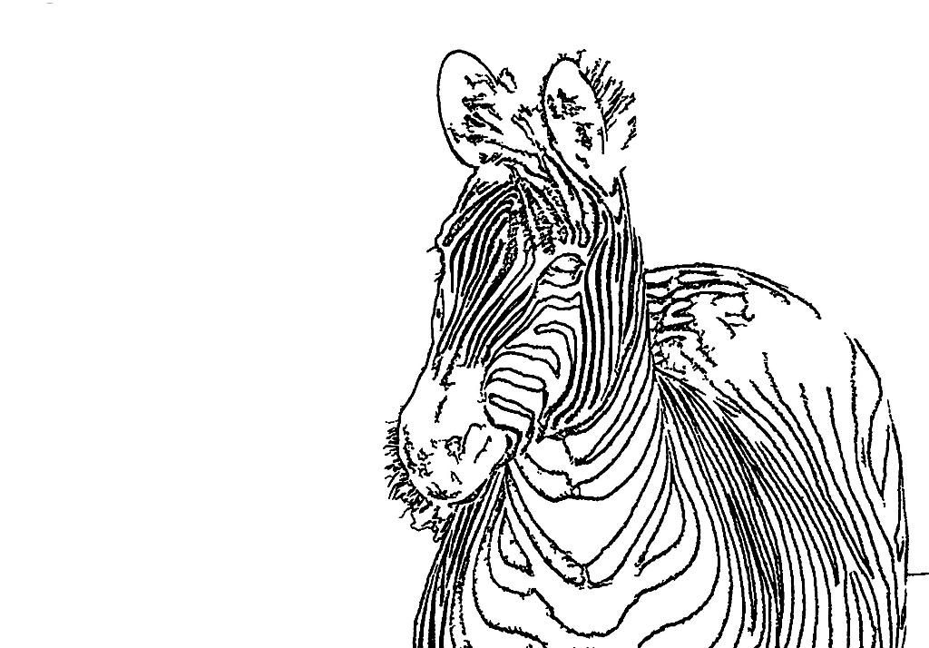 1024x714 Printable Zebra Coloring Pages For Kids