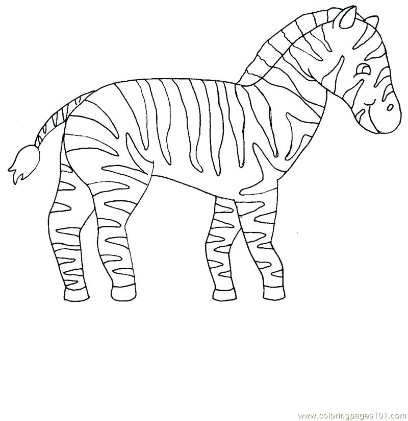 800x824 Zebra Coloring Page A Coloring Pages Kids Zebra Coloring Pages